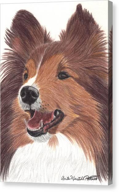 Shetland Sheepdog Vignette Canvas Print by Anita Putman