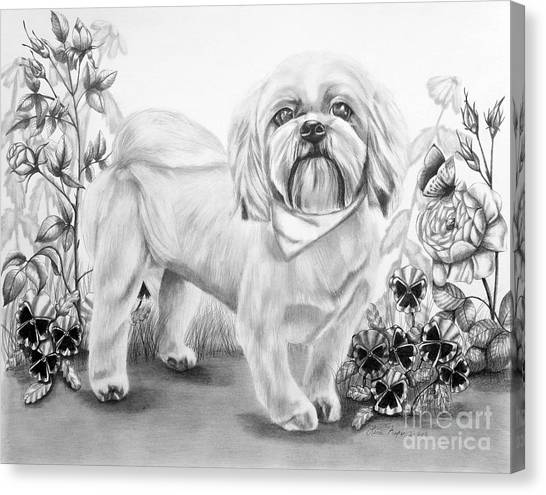 Shih Tzu In Black And White Canvas Print