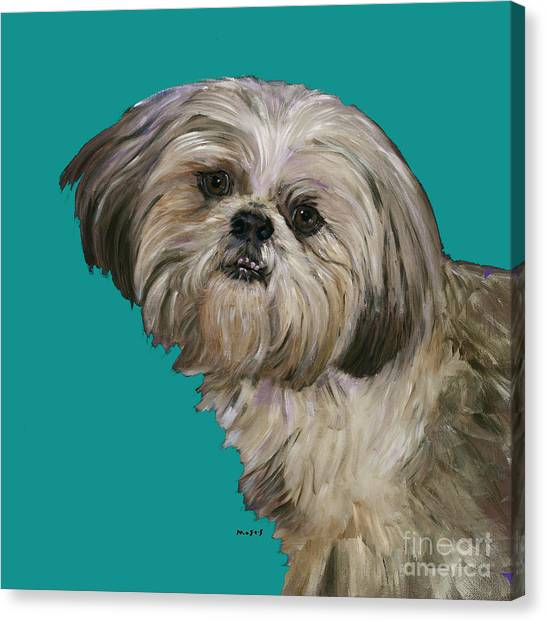 Shih Tzus Canvas Print - Shih Tzu On Turquoise by Dale Moses