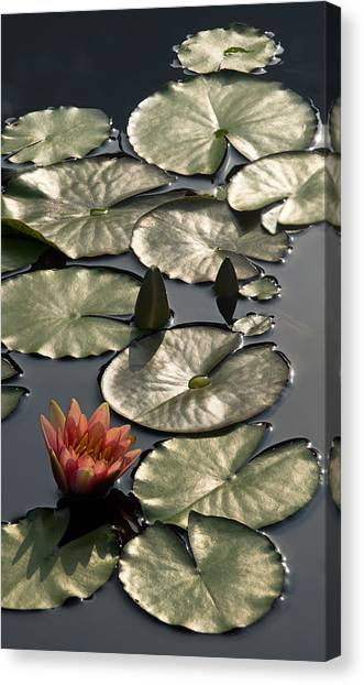 Shimmering Lily Pads Canvas Print