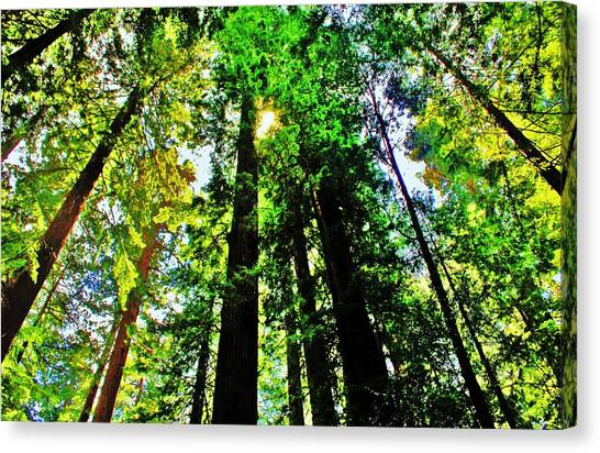 Redwood Forest Canvas Print - Shine by Benjamin Yeager