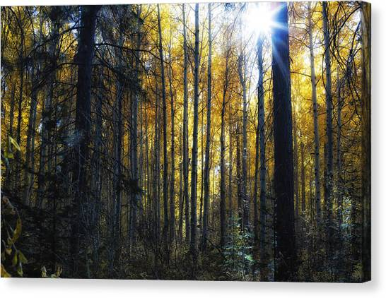 Canvas Print featuring the photograph Shining Through by Belinda Greb