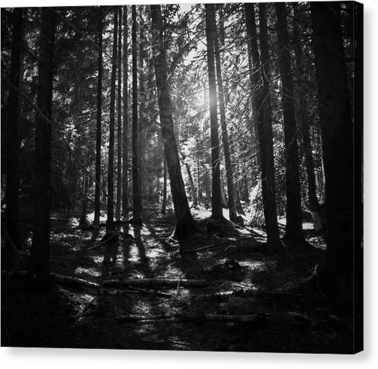 Black Forest Canvas Print - Shining Through by Nicklas Gustafsson