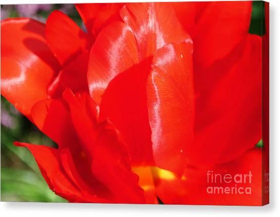 Shining Tulip Canvas Print