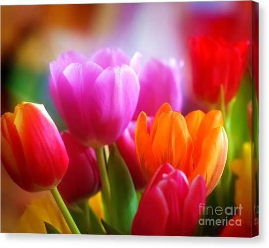 Shining Tulips Canvas Print