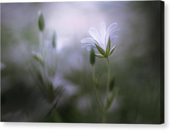 Tenderness Canvas Print - Shinning by Maxime Dugenet