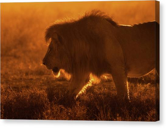 Medieval Canvas Print - Shiny King by Mohammed Alnaser