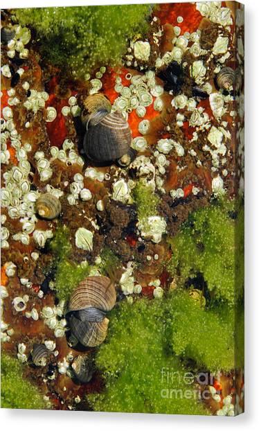 Shoals Tide Pool Canvas Print