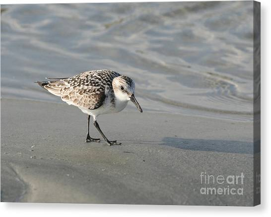 Shore Bird On Ocean Beach Canvas Print