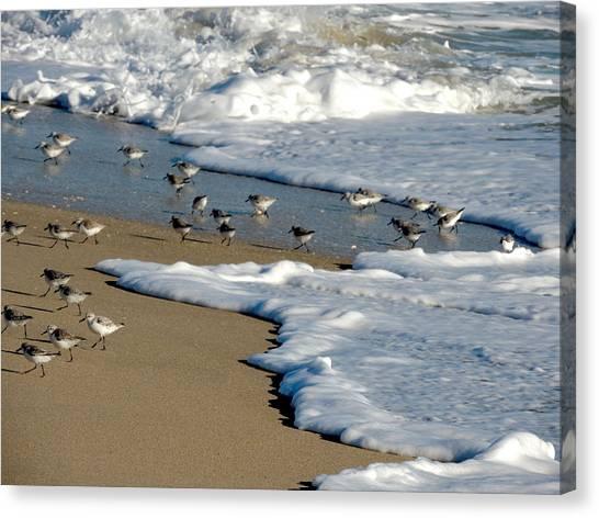 Shore Birds South Florida Canvas Print