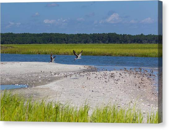 Shorebirds And Marsh Grass Canvas Print