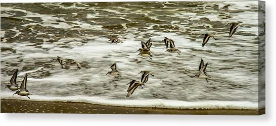 Shorebirds At Duck Canvas Print