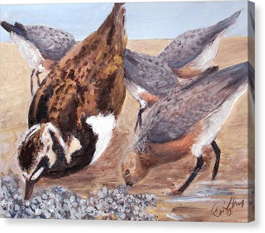 Shorebirds Canvas Print