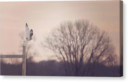 Owls Canvas Print - Short Eared Owl At Dusk by Carrie Ann Grippo-Pike