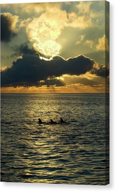 Sunrise Horizon Canvas Print - Short-finned Pilot Whales At Dawn by Christopher Swann/science Photo Library