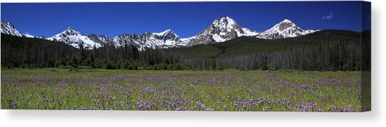 Showy Penstemon Wildflowers Sawtooth Mountains Canvas Print