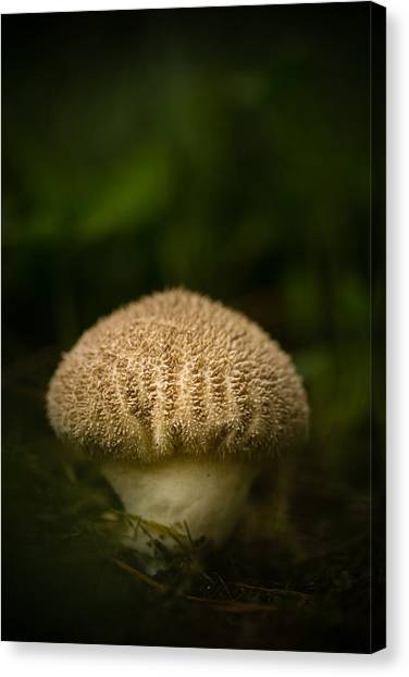 Shrooms Canvas Print - Shroomy by Shane Holsclaw