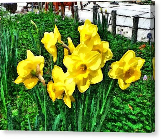 Shy Daffodils  Canvas Print