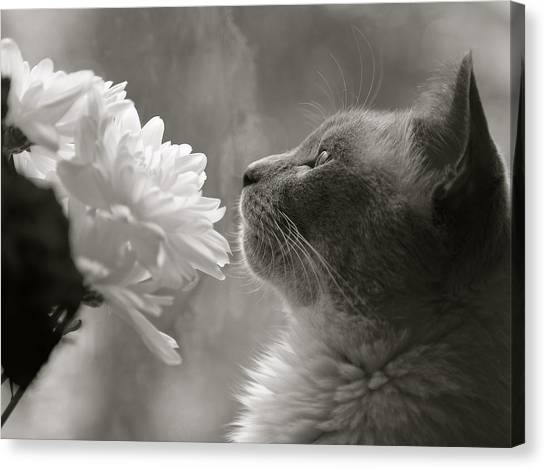 Siamese Cat With Flowers Canvas Print