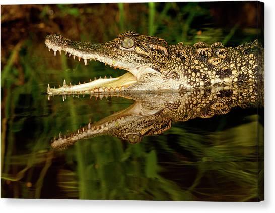 Crocodiles Canvas Print - Siamese Crocodile, Crocodylus by David Northcott