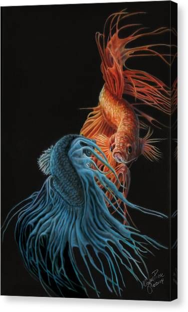 Betta Fish Canvas Prints | Fine Art America