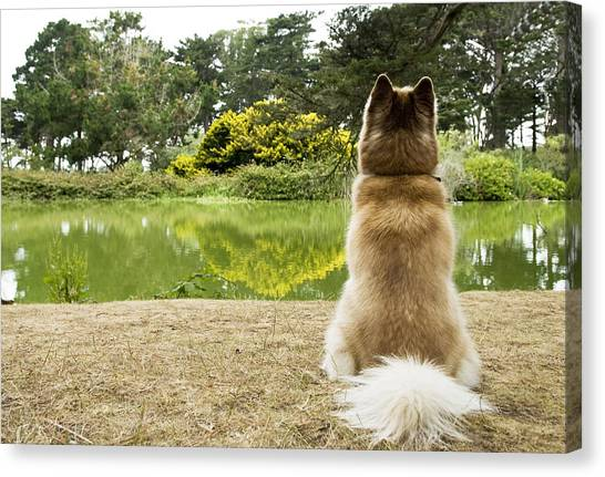 Siberian Husky Admiring Lake View, San Francisco, California, Usa Canvas Print by Bojana Korach