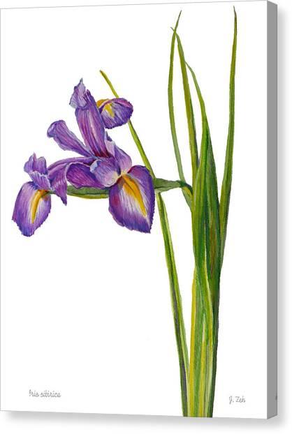 Siberian Iris - Iris Sibirica Canvas Print