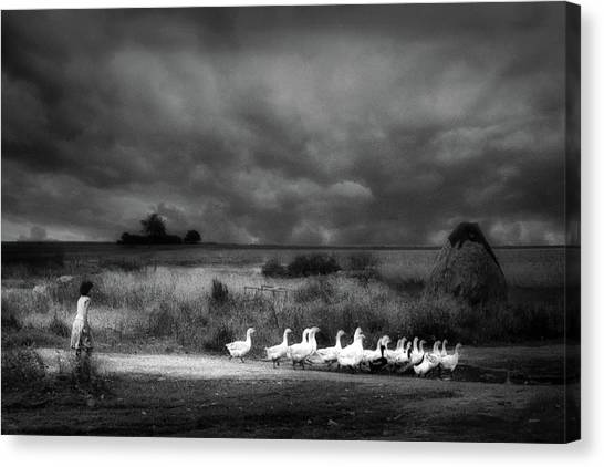Geese Canvas Print - Sicily by Holger Droste