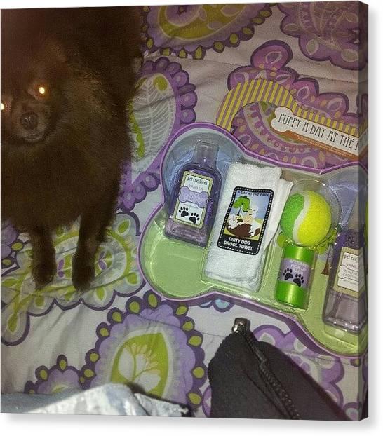 Pomeranians Canvas Print - Sick All Day :/. Look What My Dog Got by Jackeline Gonzalez