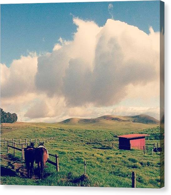 Horse Farms Canvas Print - Side By Side by Courtney Jines