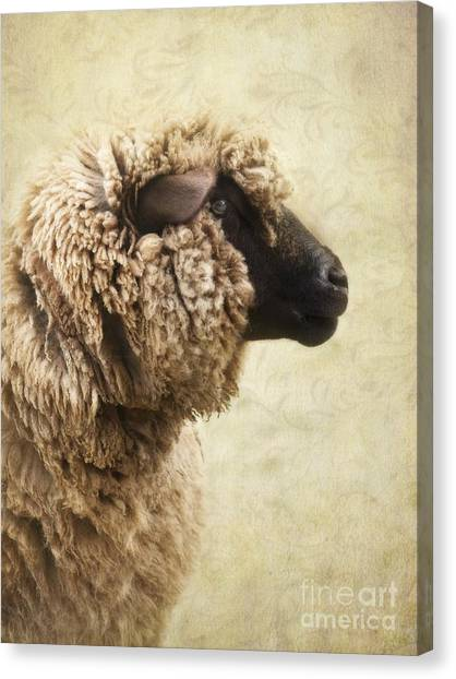 Sheep Canvas Print - Side Face Of A Sheep by Priska Wettstein