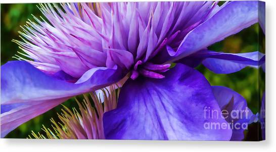 Side View Clematis Canvas Print