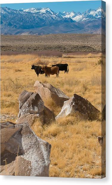 Sierra Cattle Canvas Print