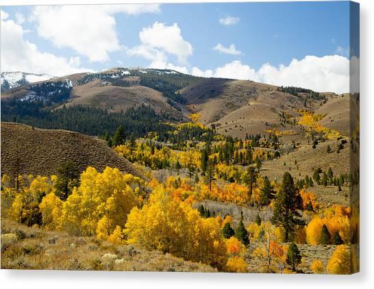 Sierra Foliage Canvas Print