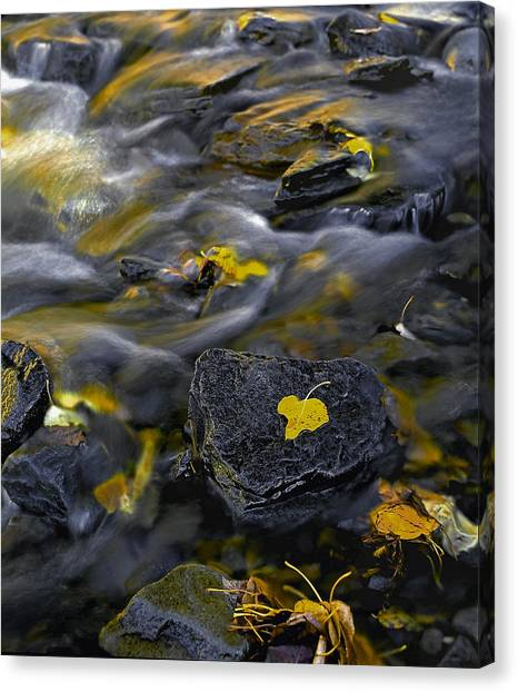 Sierra Stream Canvas Print