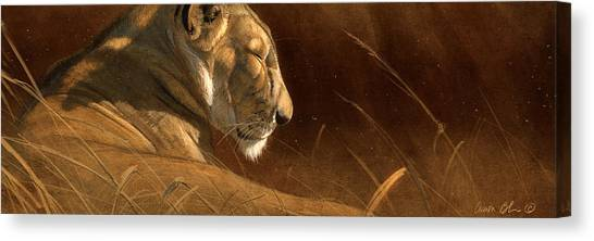 Lions Canvas Print - Siesta by Aaron Blaise