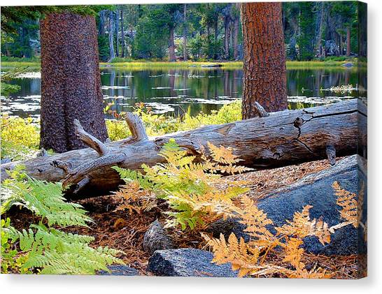 Siesta Lake Canvas Print