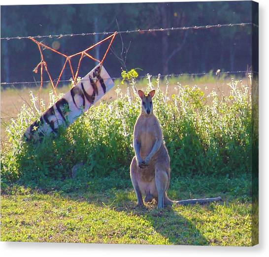 Canvas Print featuring the photograph Signs  by Debbie Cundy