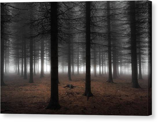 Pine Trees Canvas Print - Silence by Dragisa Petrovic