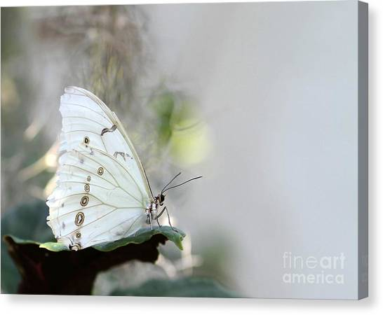 Silent Beauty Canvas Print