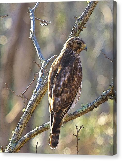 Silent Hunter Canvas Print by Constantine Gregory