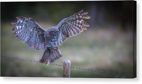 Silent Landings  Canvas Print