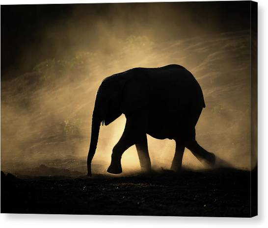 Dust Canvas Print - Silhouette by Jaco Marx
