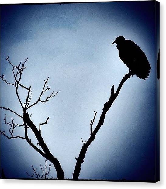 Vultures Canvas Print - #silhouette Of A #blackvulture by Robb Needham