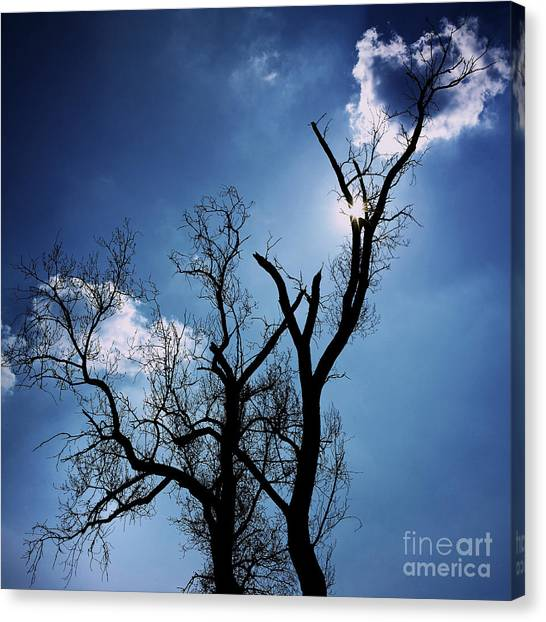 Ashes Canvas Print - Silhouette Of Old Tree Branches Against Blue Sky Backlit by Bernard Jaubert
