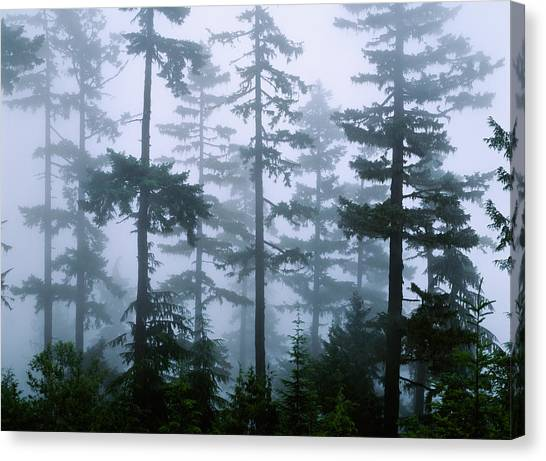 Foggy Forests Canvas Print - Silhouette Of Trees With Fog by Panoramic Images
