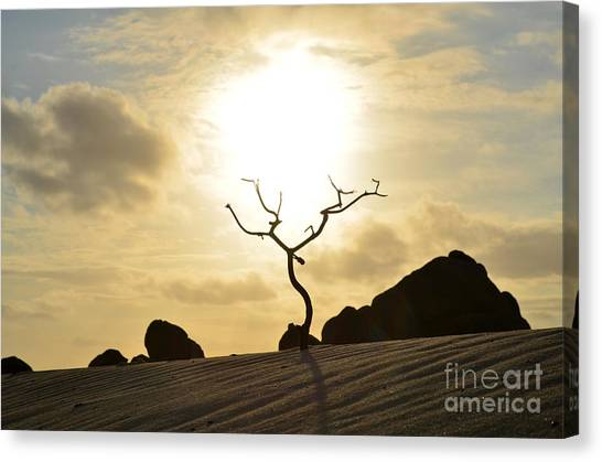 Silhouetted Tree At Dawn In Aruba Canvas Print