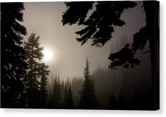 Silhouettes Of Trees On Mt Rainier Canvas Print