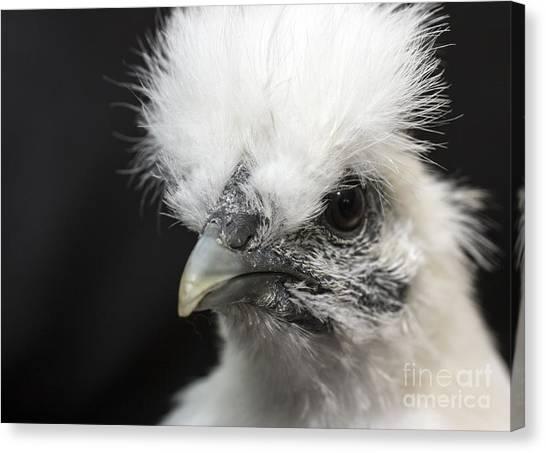 Silkie Chicken Portrait Canvas Print