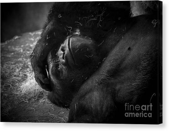 Deep In Thought Of Freer Times Canvas Print